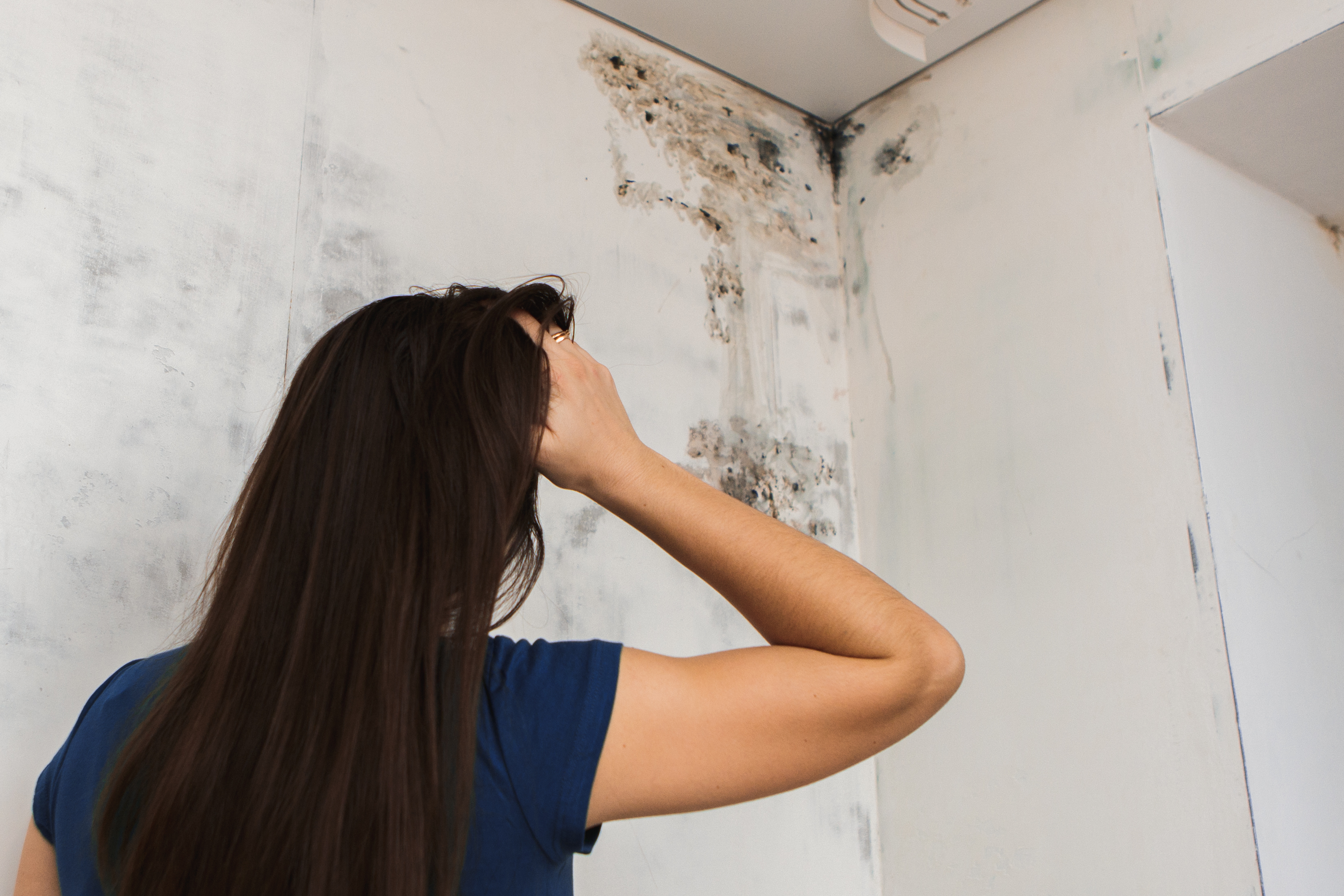 The Truths (and Myths) About Black Toxic Mold